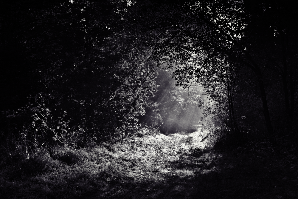 grayscale photo of leafed plants surround path