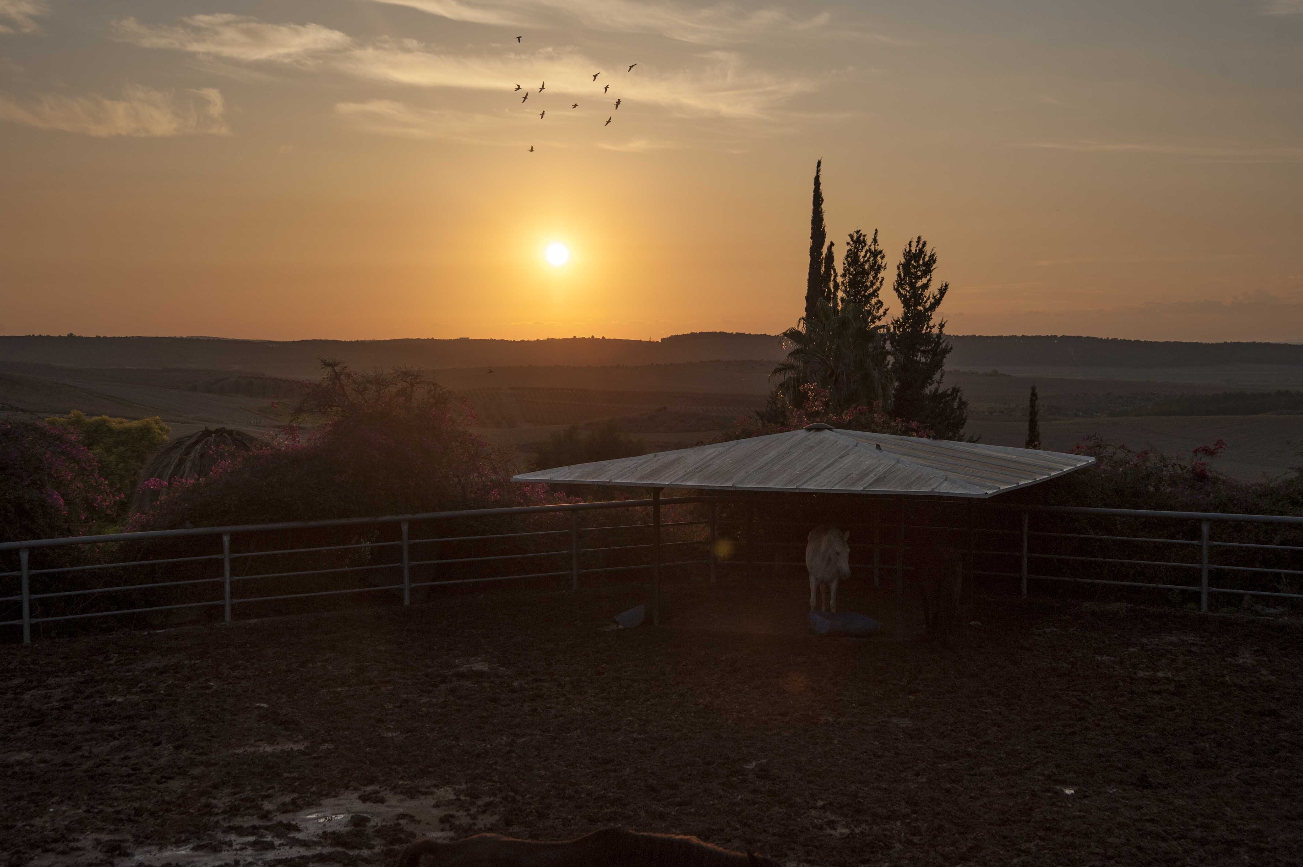 A pony standing under a low wooden roof at the edge of an enclosure during sunset