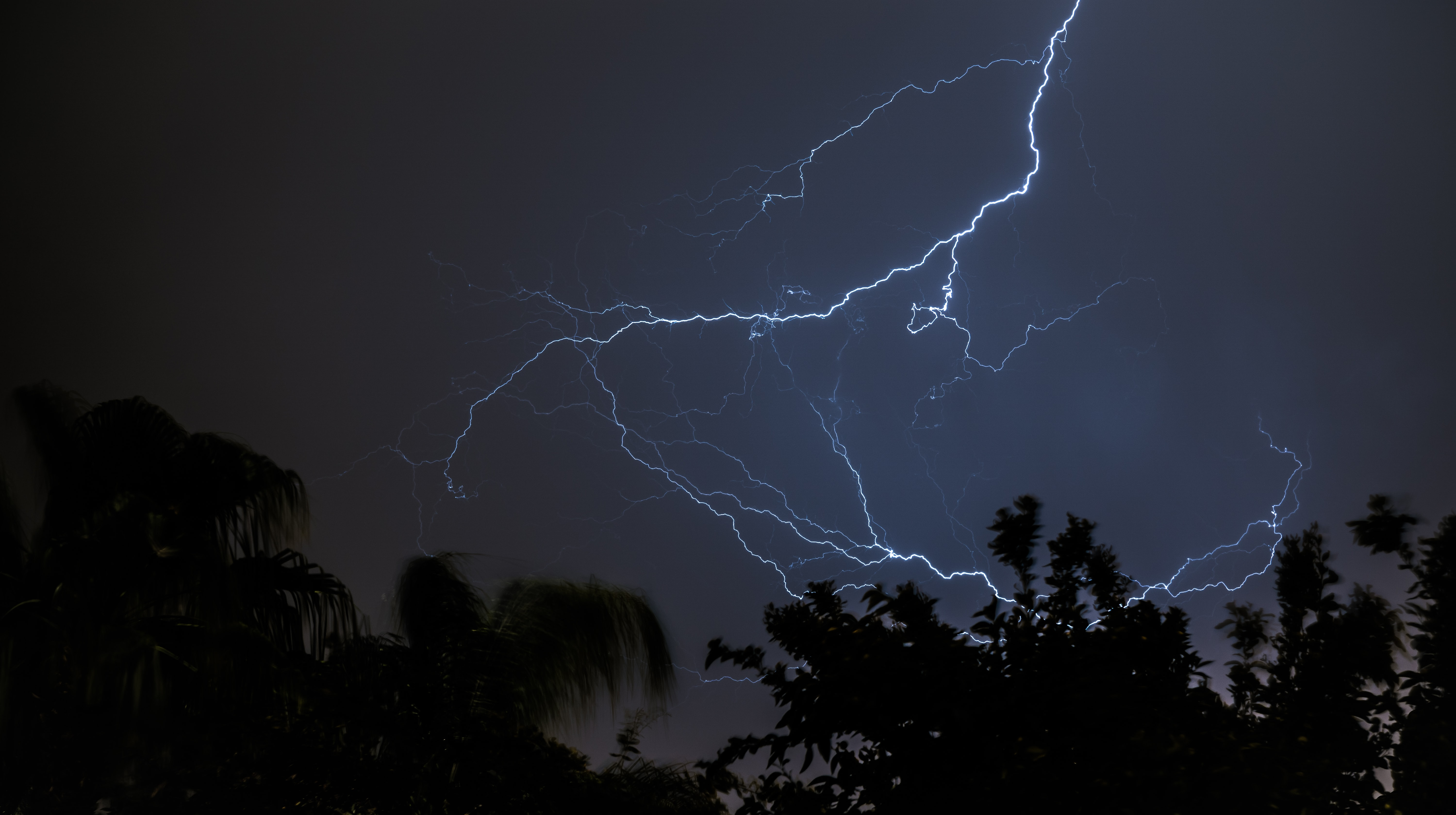 Forked lightning on a dark sky over tree silhouettes
