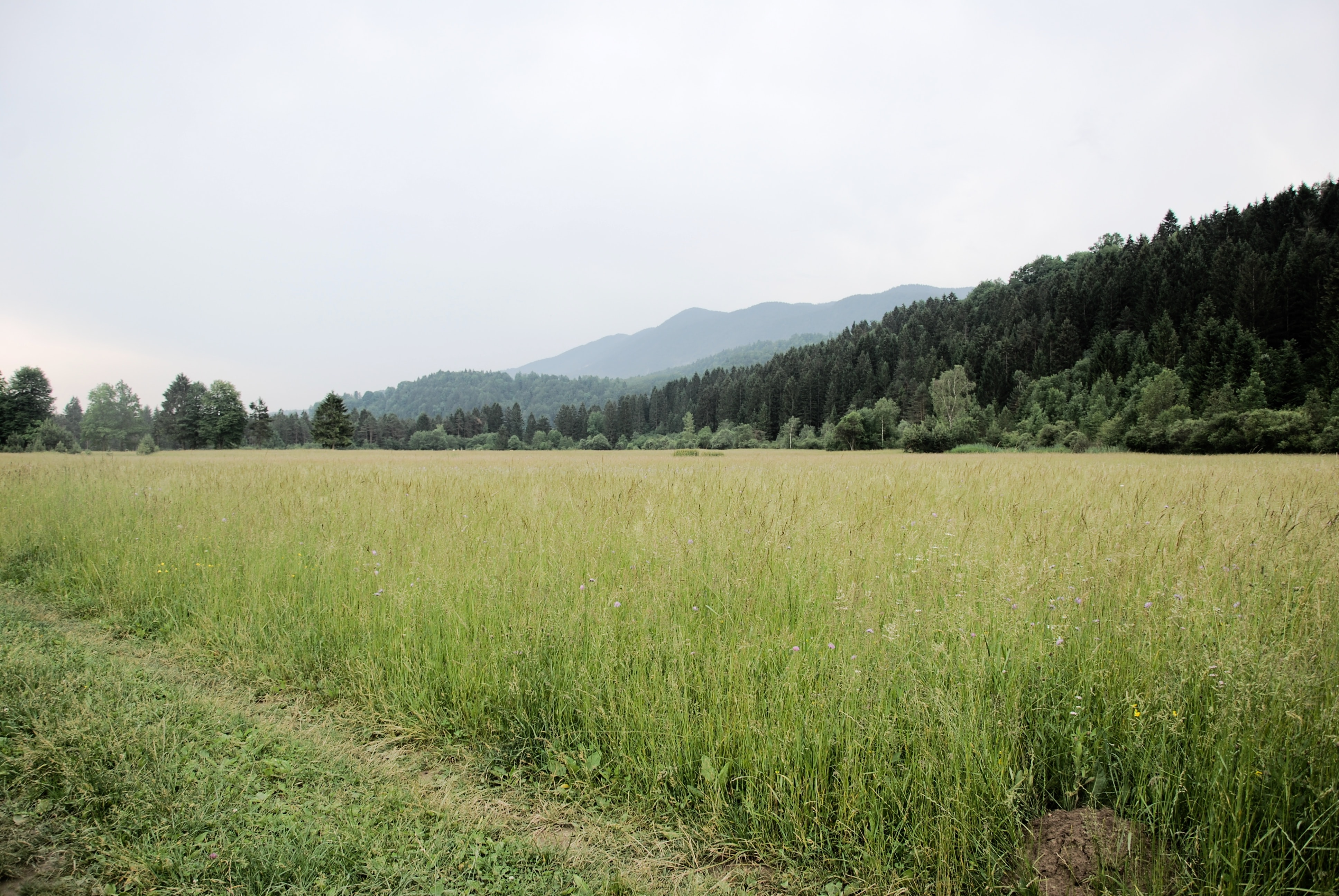 field of green grasses within mountain range during daytime