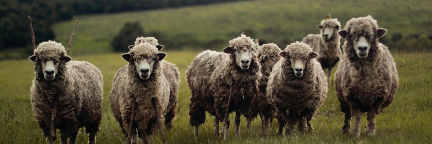 improve the focus of written communication to the sheep