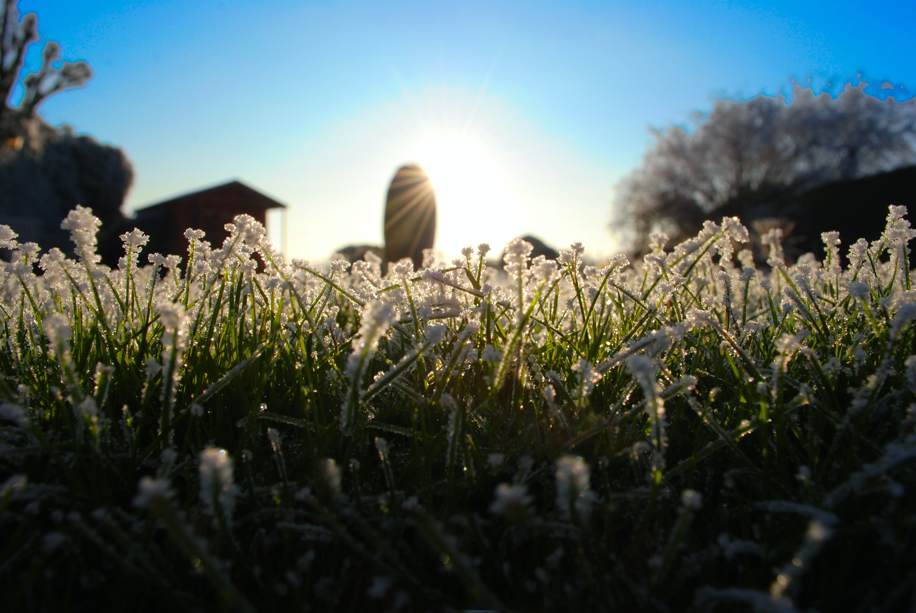 A low shot of a patch of white-flowered grass with sun shining above