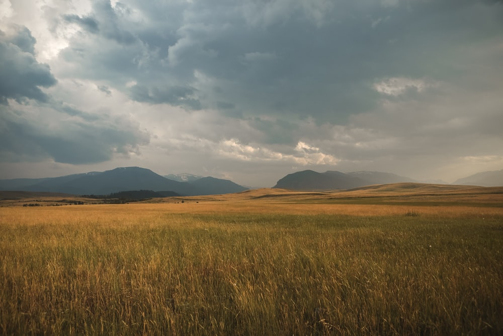 landscape photography of grass plains under cloudy sky during daytime