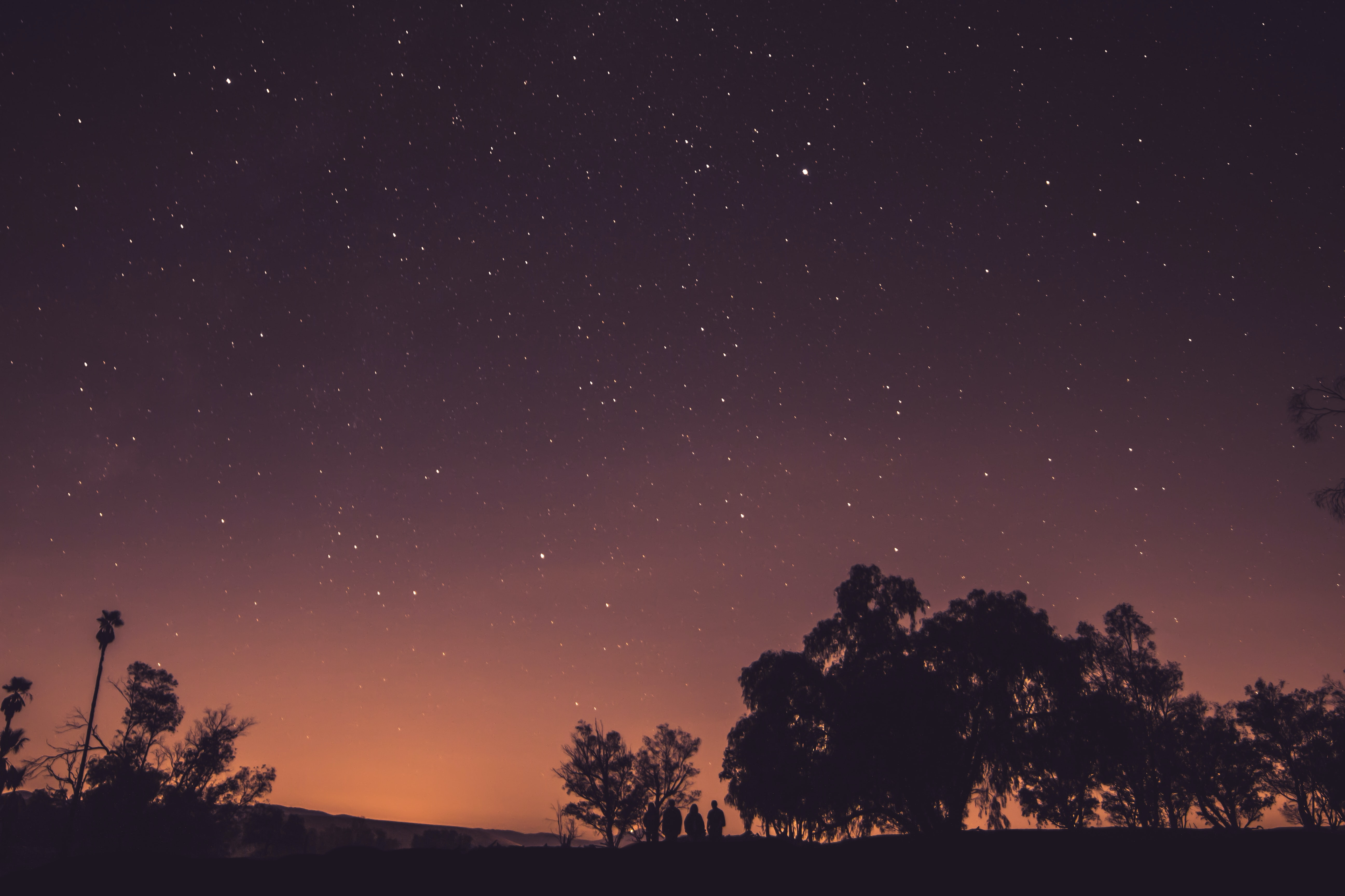 A photo of silhouette trees under a star-filled dark purple sky