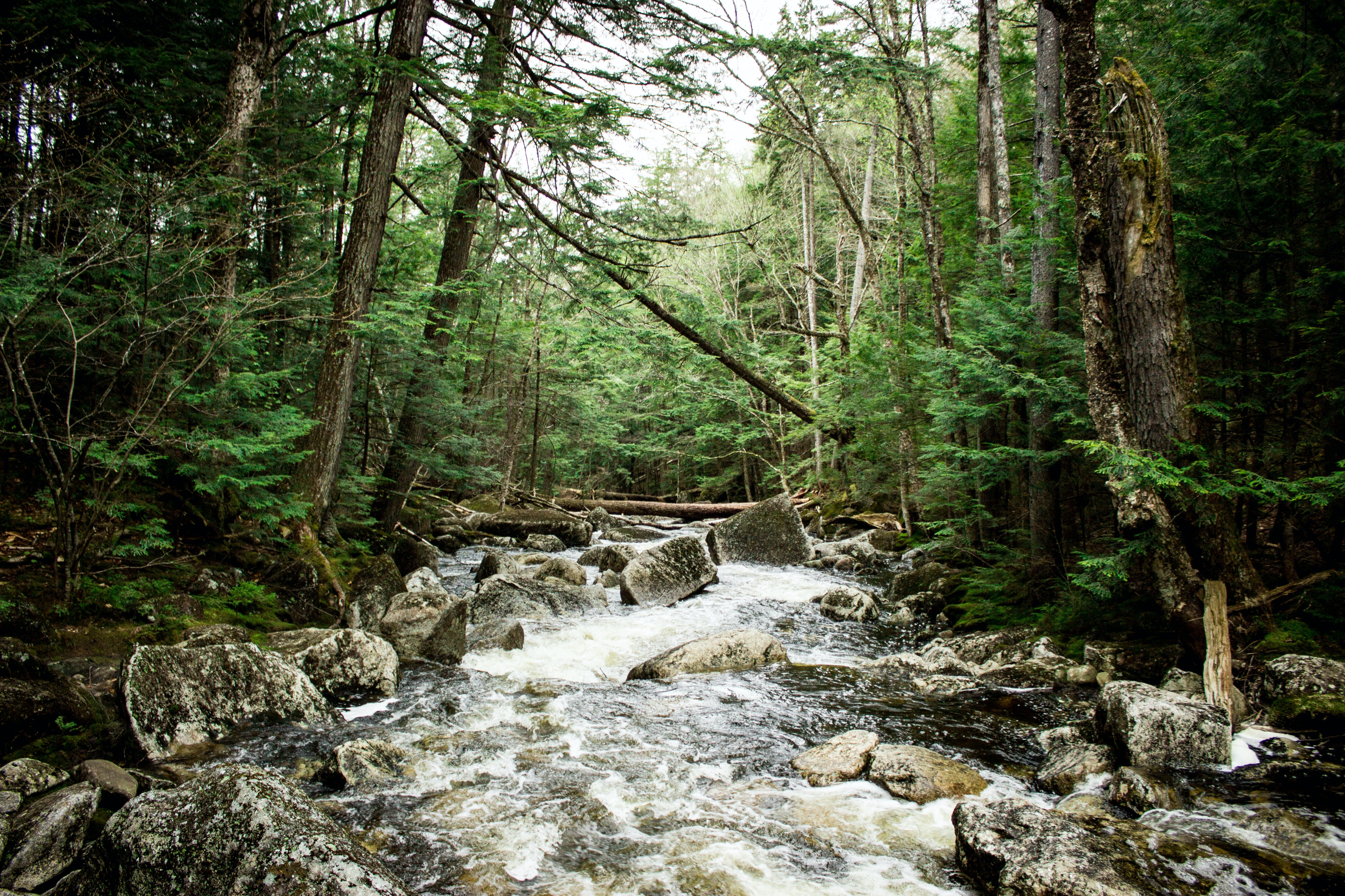 landscape photography of forest with river