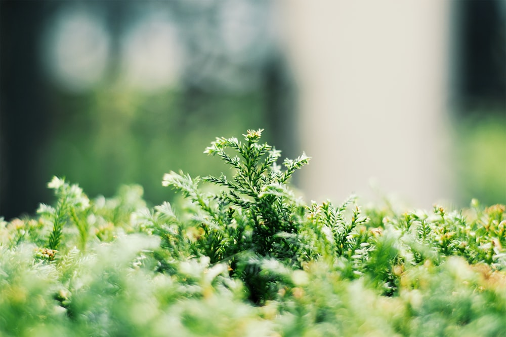 green leafed plant selective focus photography