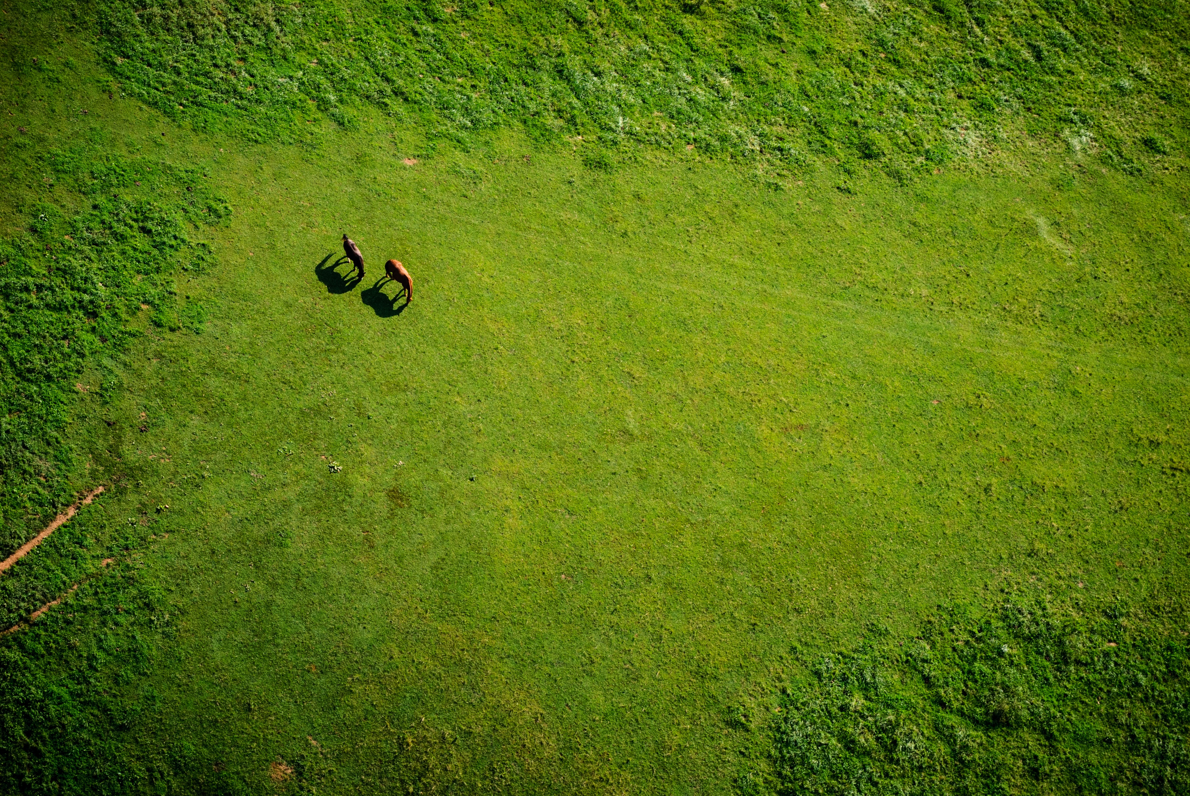 An aerial shot of two horses grazing in a green plain