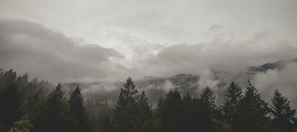 forrest during cloudy day