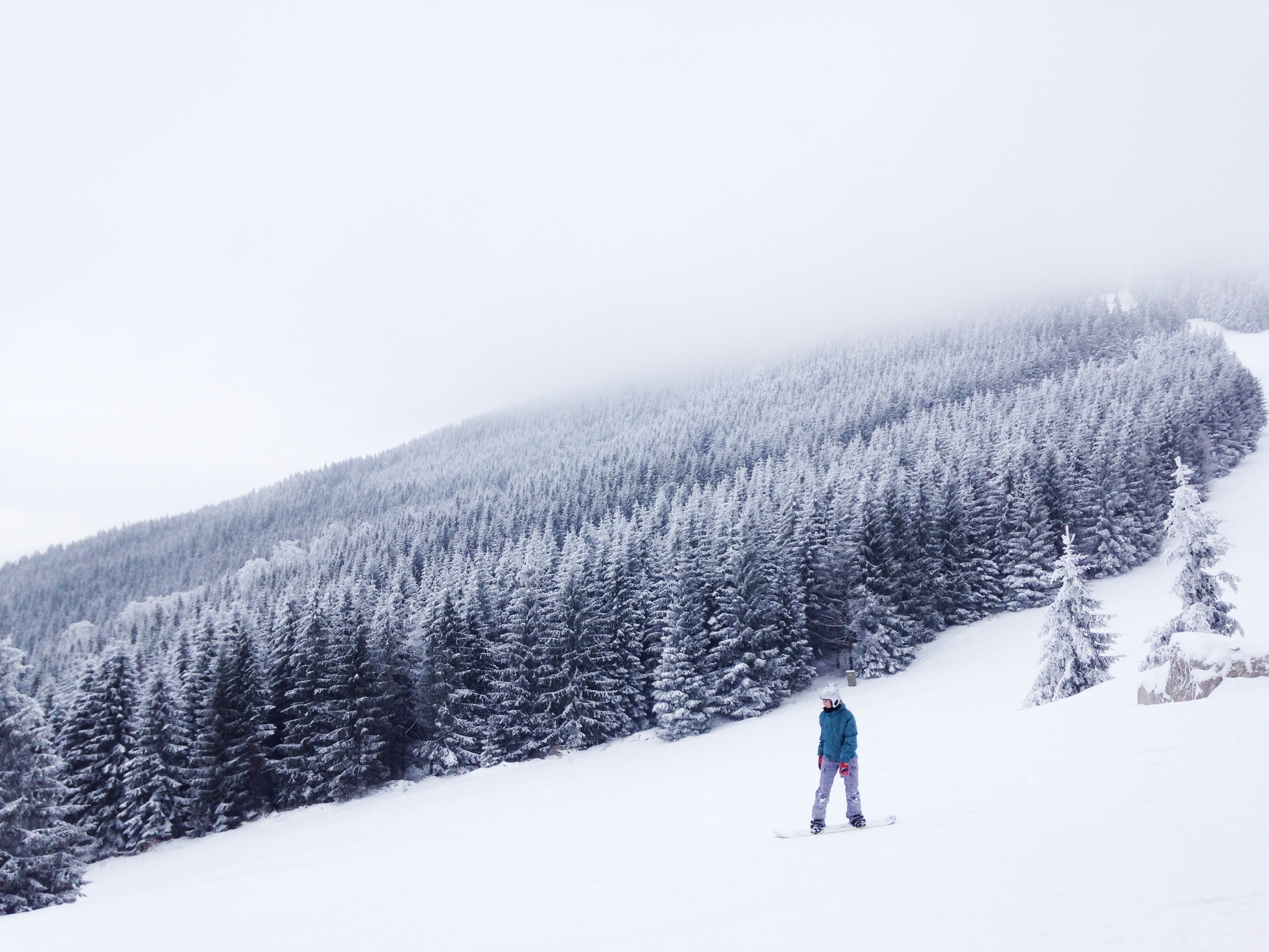 Snowboarding on a snowy slope alongside a thick patch of trees