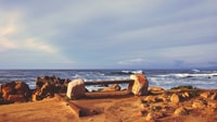 seashore near body of water