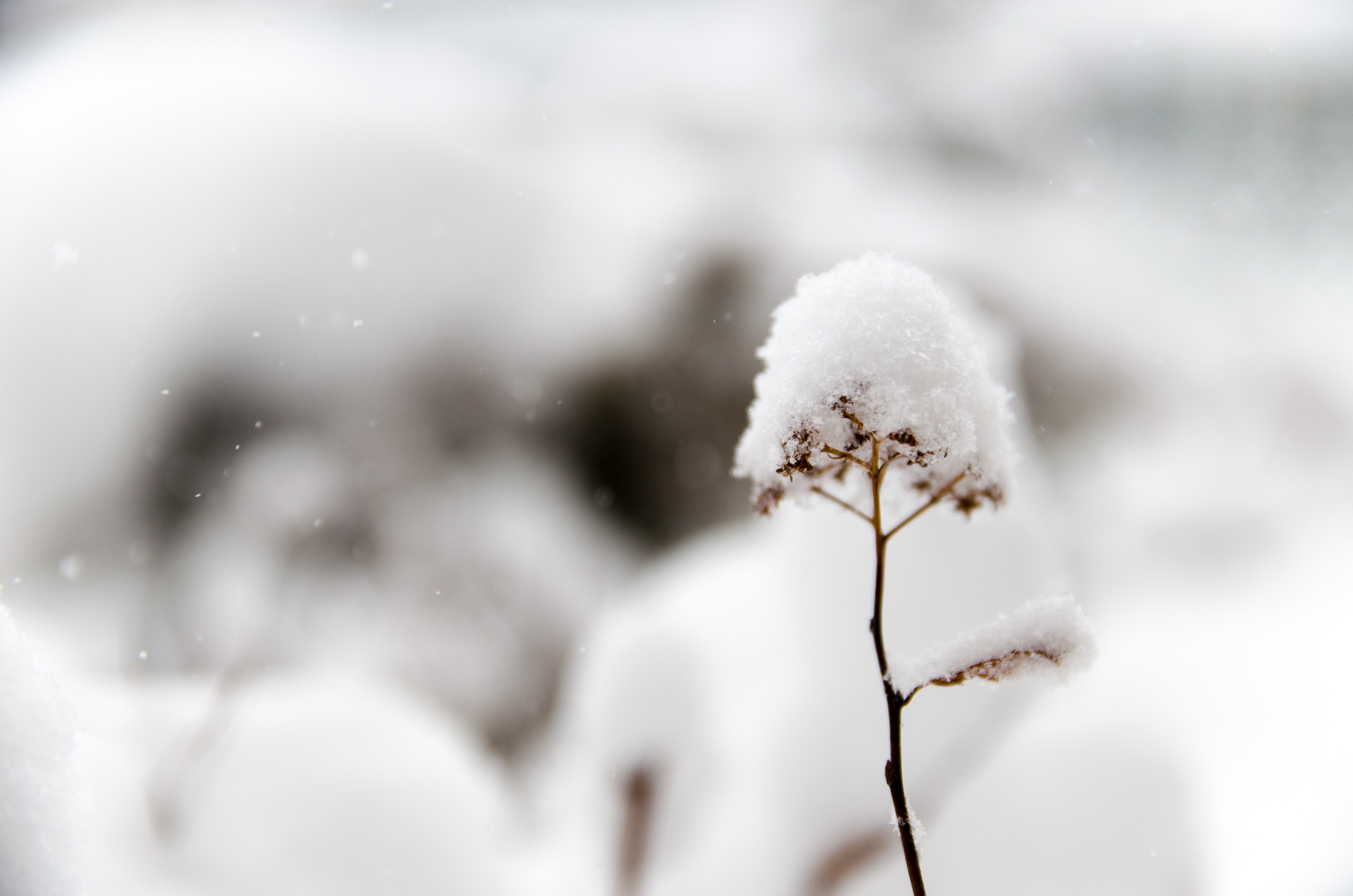 closeup photo of flower covered in snow