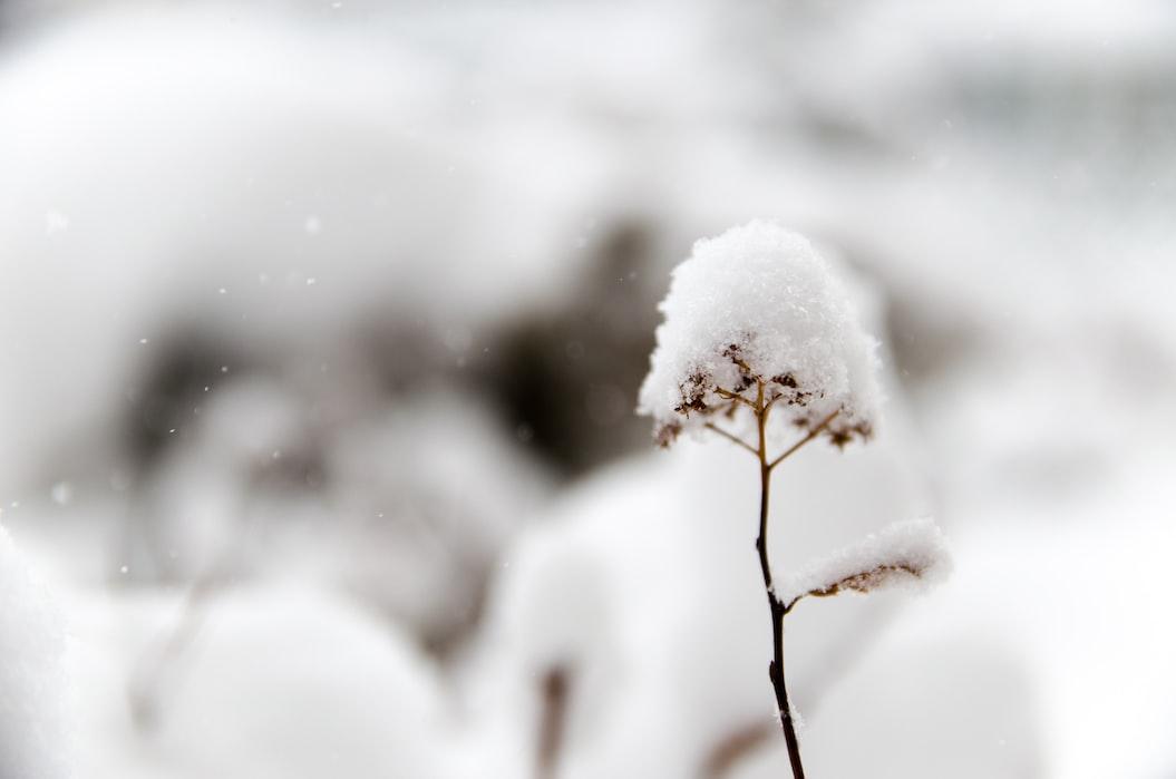 Flower Gardening In Winter | Practical Garden Ideas For Winter For A More Productive Season