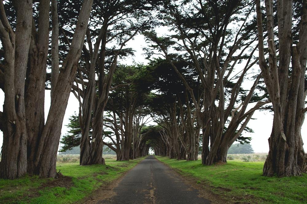 gray concrete road near brown trees