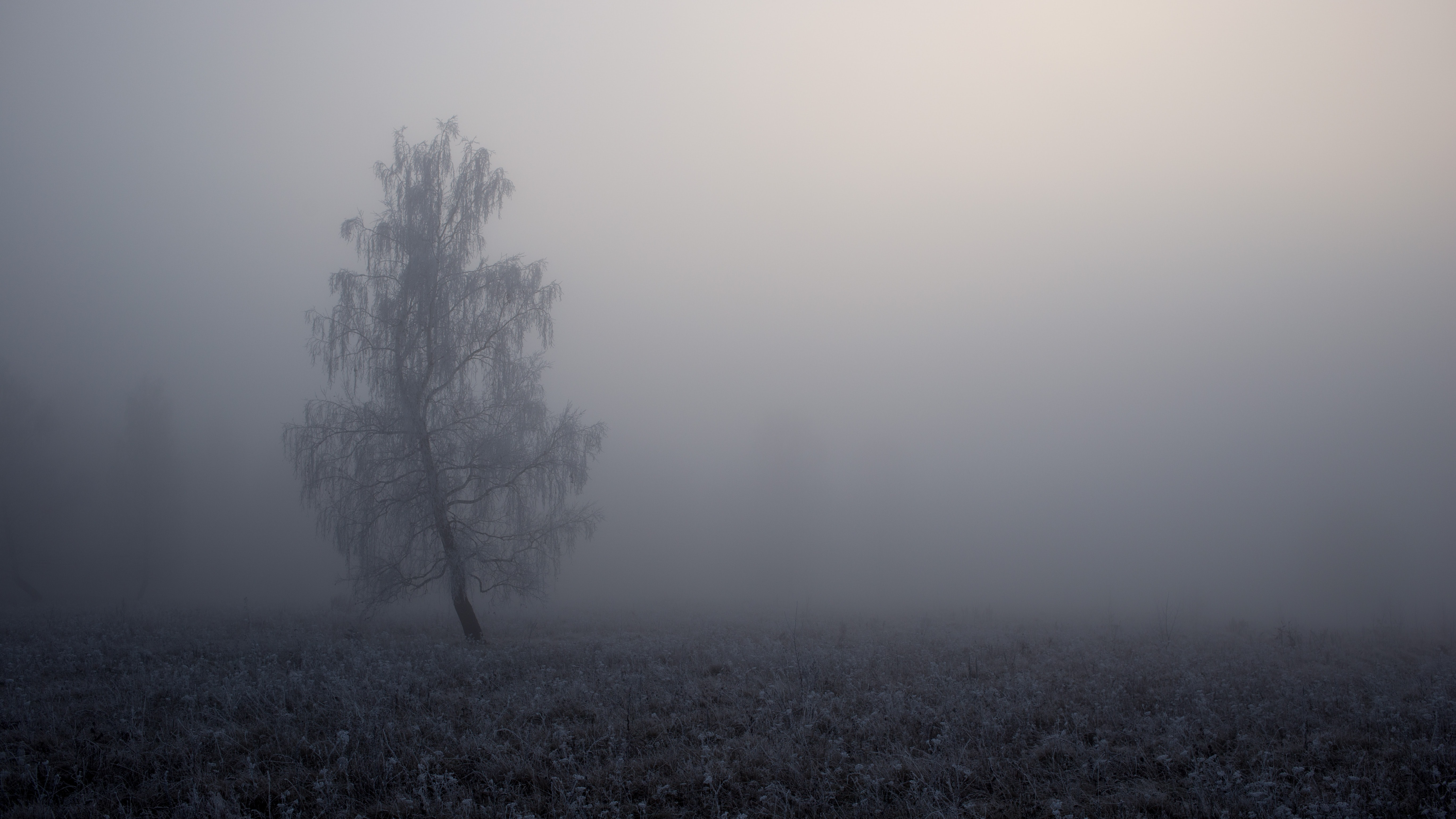 A dreary shot of a lone tree with frost on its branches