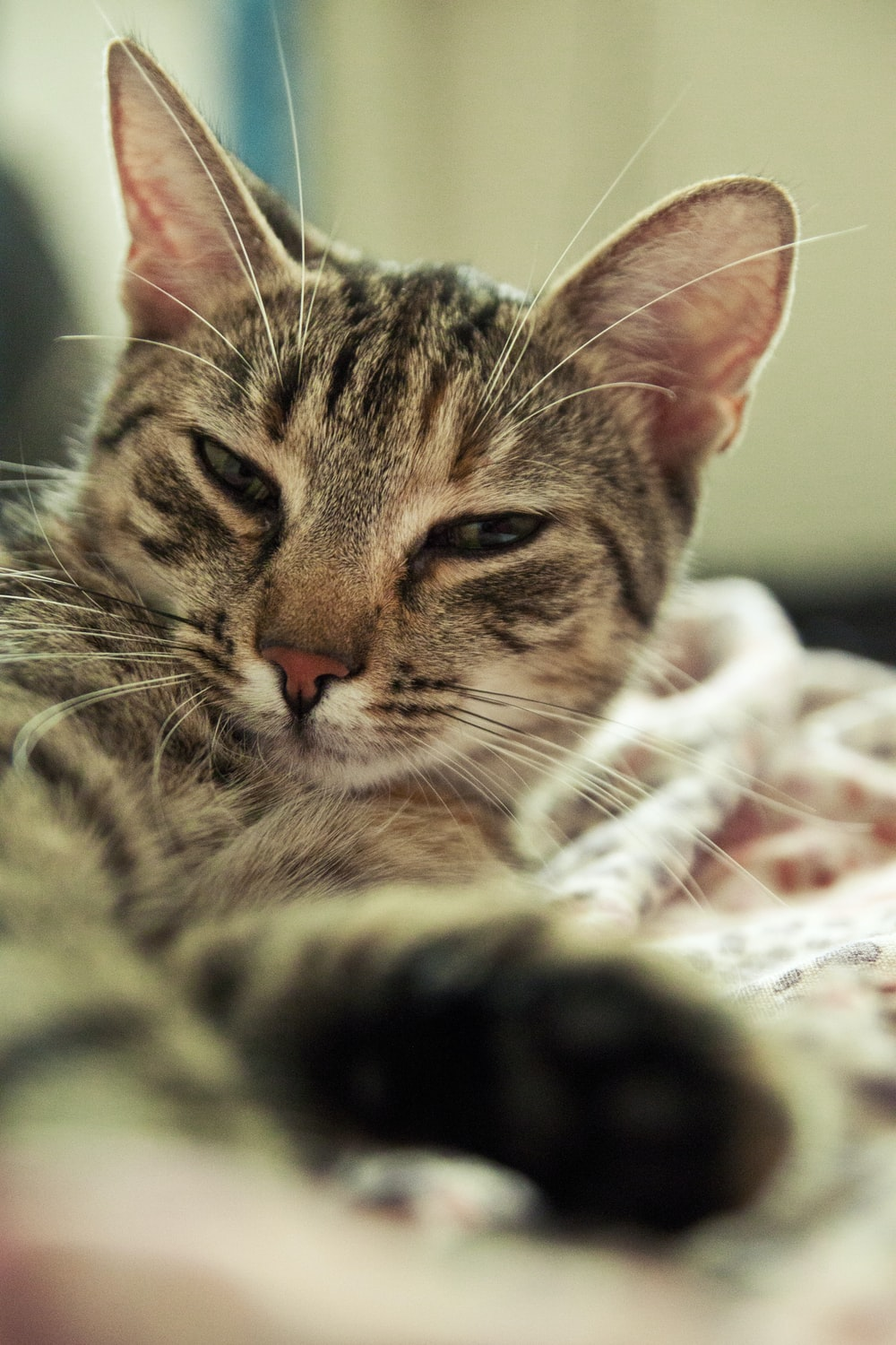 brown tabby cat lying on white and red textile