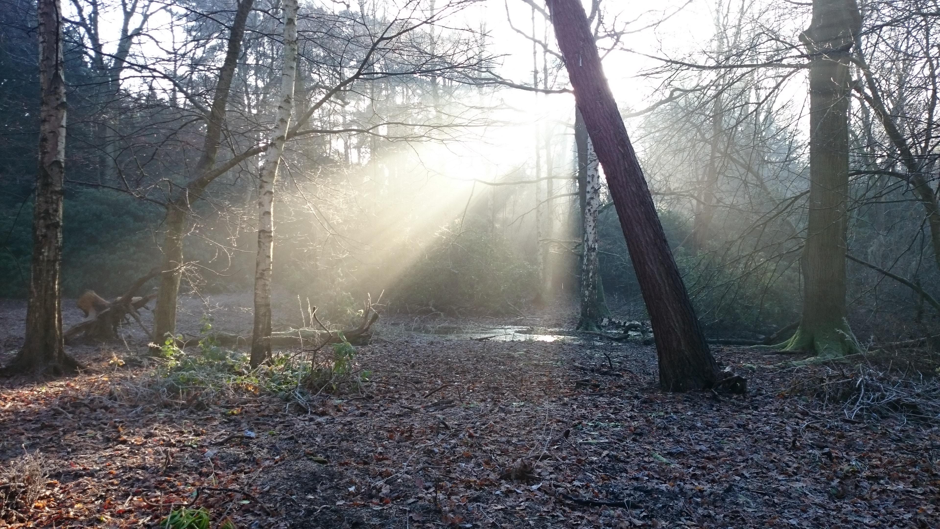 Sun beams shine on a leafy forest field