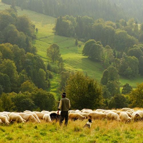 """Jesus Said to Him, """"Feed My Sheep."""