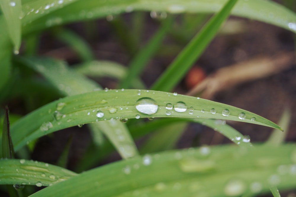tilt shift lens photography of green leaf with water