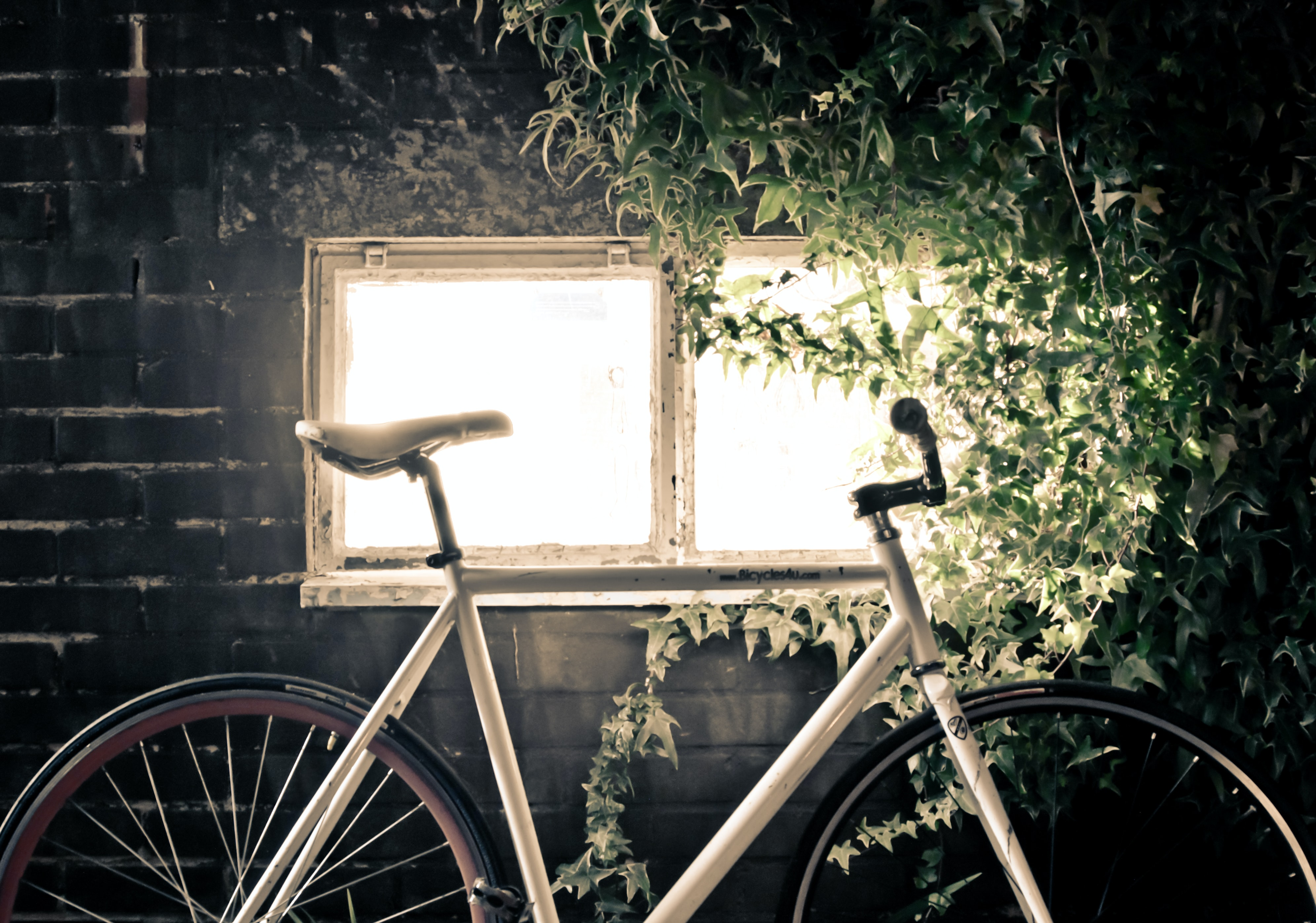 White bike leans against dark brick wall and bright window covered in green ivy