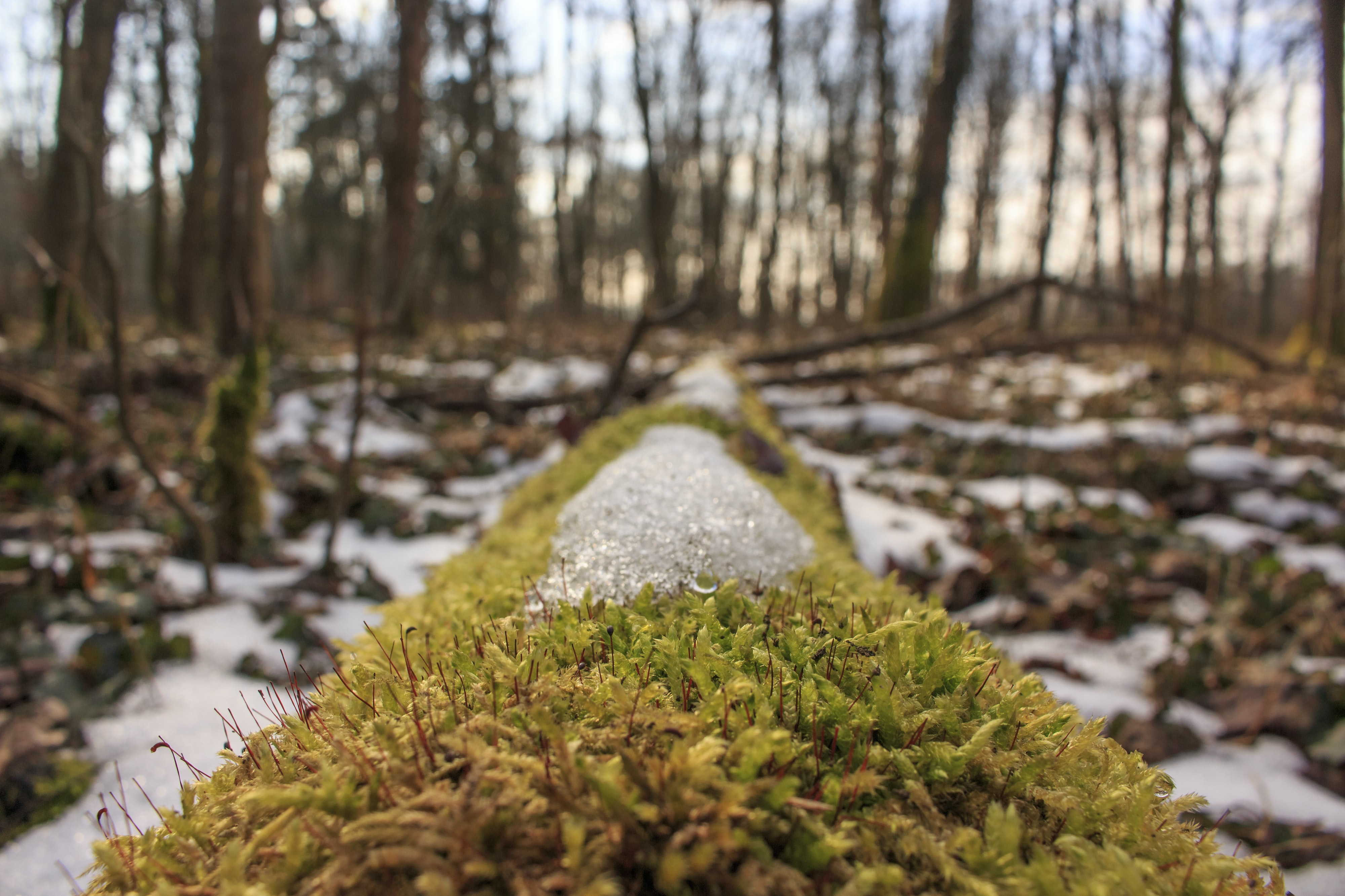 closeup photography of moss and snow