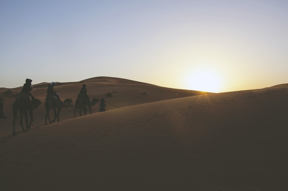silhouette of three person riding on camels while passing through desert