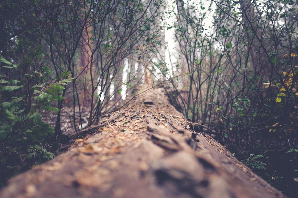 pathway between green leafed plants