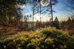最新调查数据首次显示,非洲除森林外还有70亿棵树木