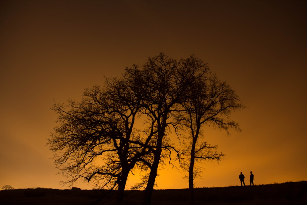 silhouette of man and woman near trees