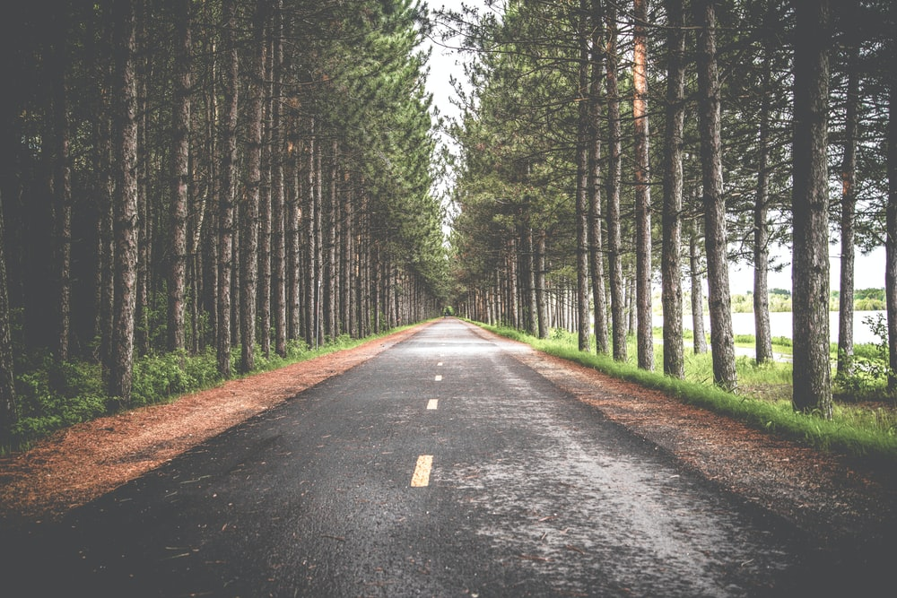 empty asphalt road in between row of trees
