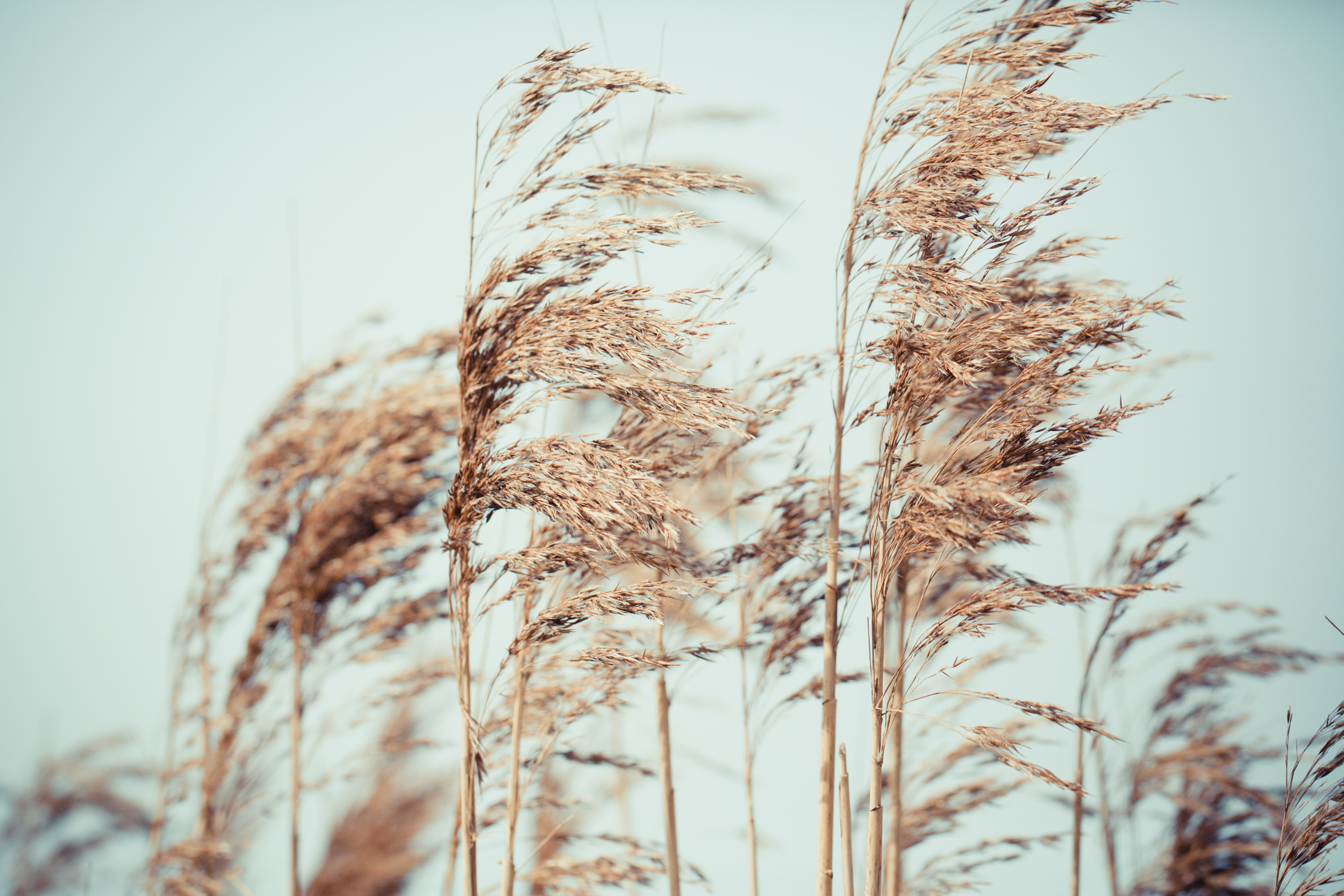 photography of plants under white sky during daytime