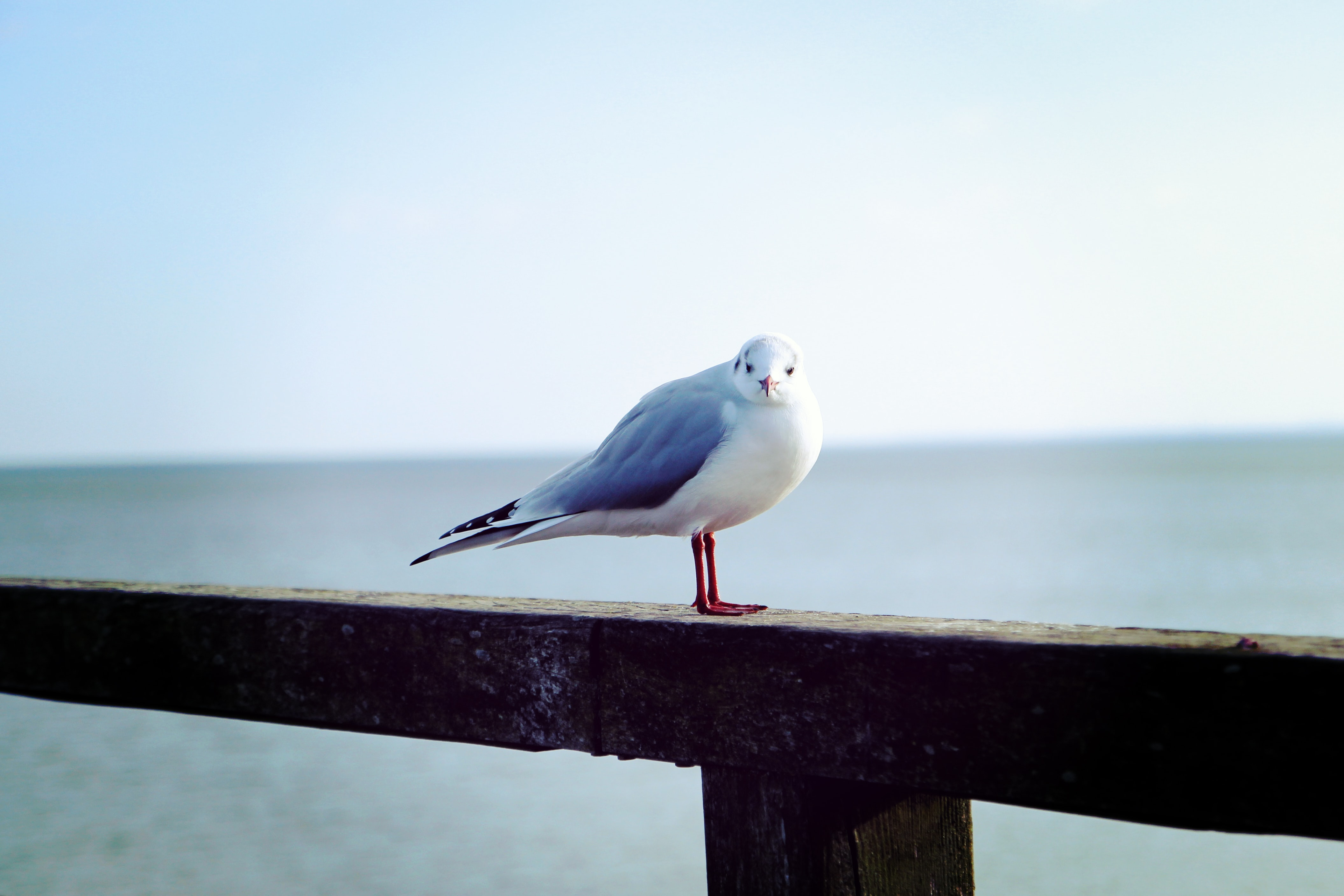 white and blue bird on rail