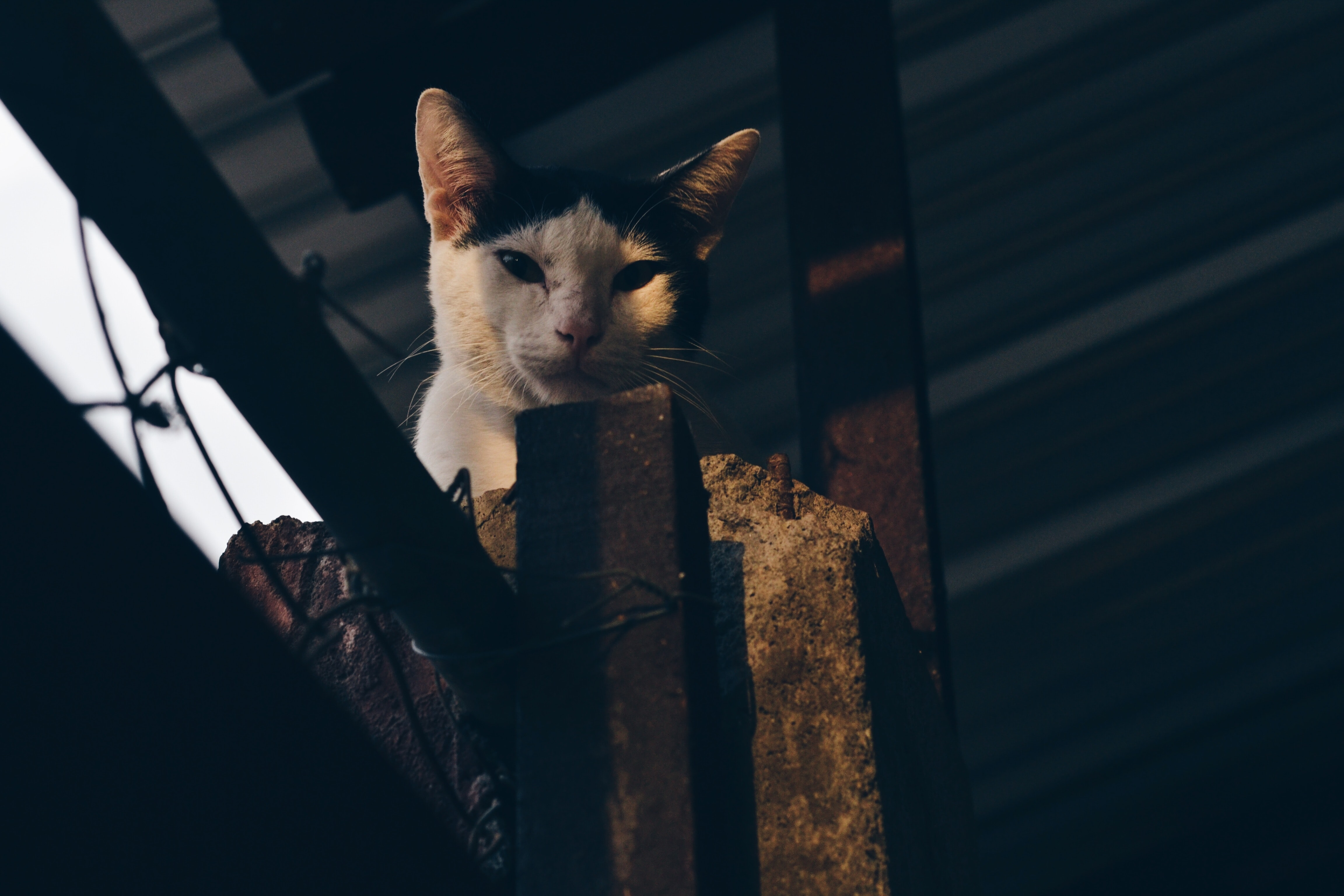A cat sitting on a concrete fence looks down at the camera