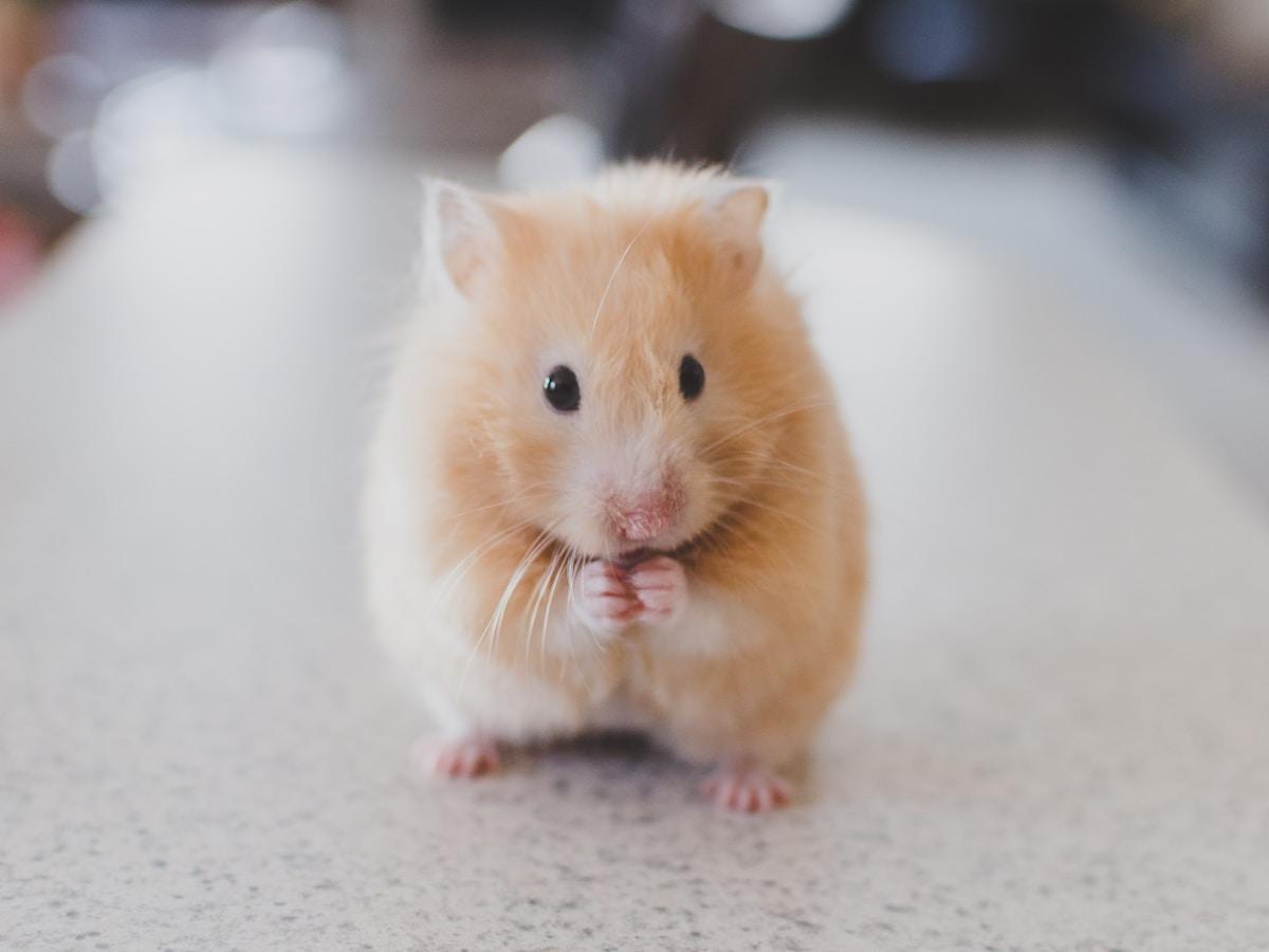tratamiento contra el cáncer, ARNm, selective focus photography of brown hamster
