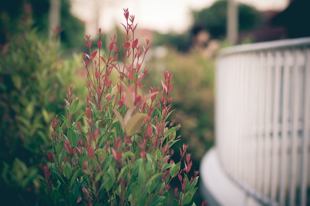 selective focus photography of green leafed plants