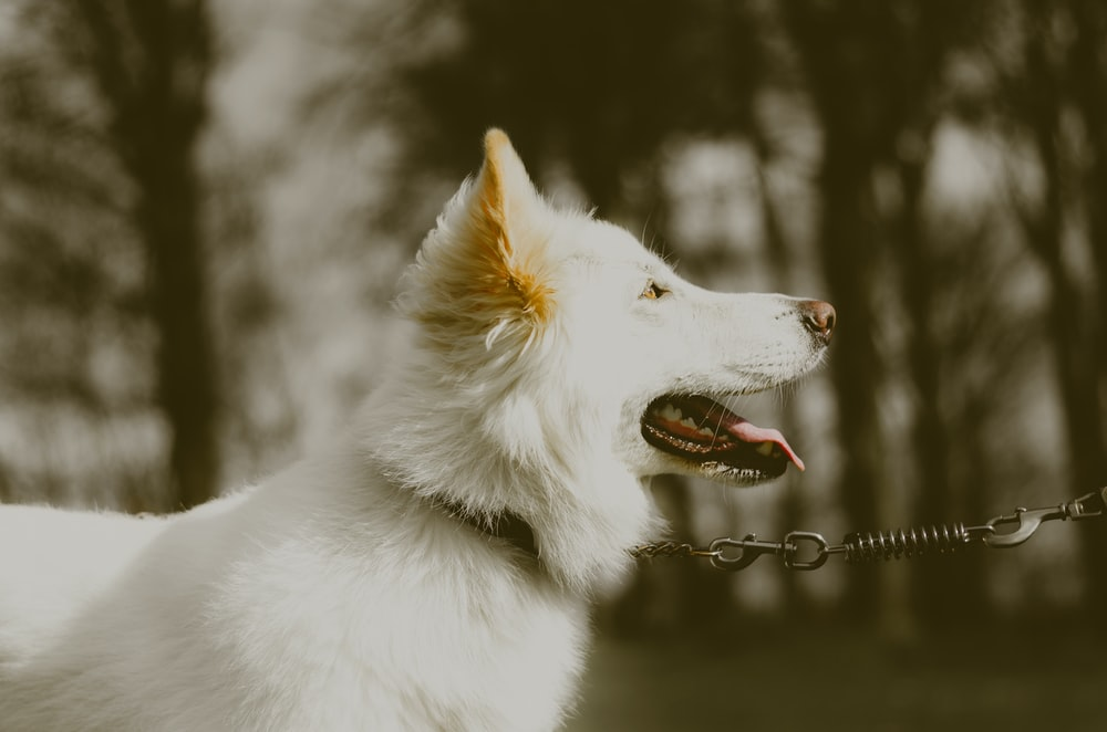 shallow focus photography of white dog