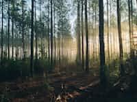 The Trees and the Lumberjack lumberjack stories