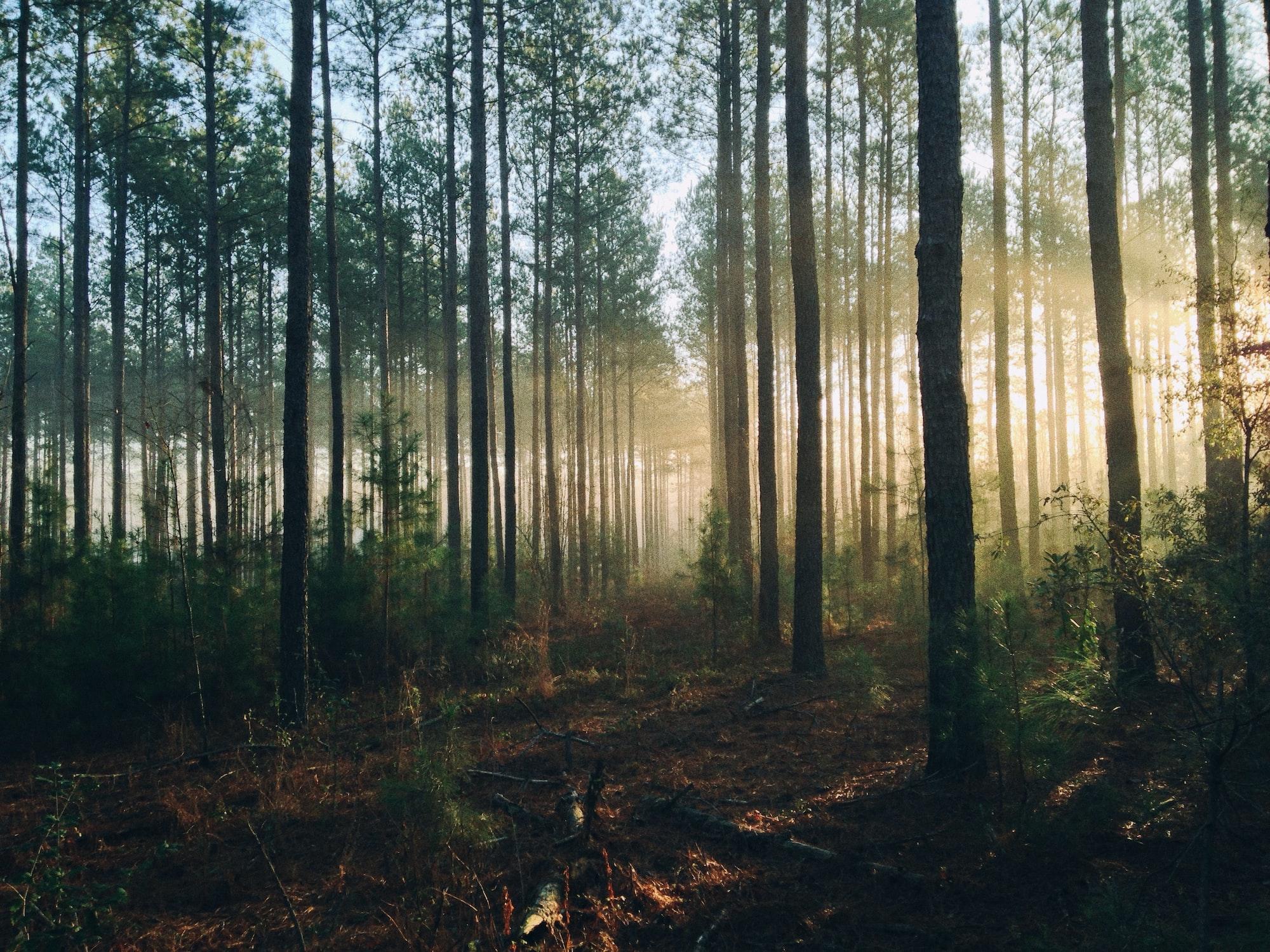 Illuminated woods