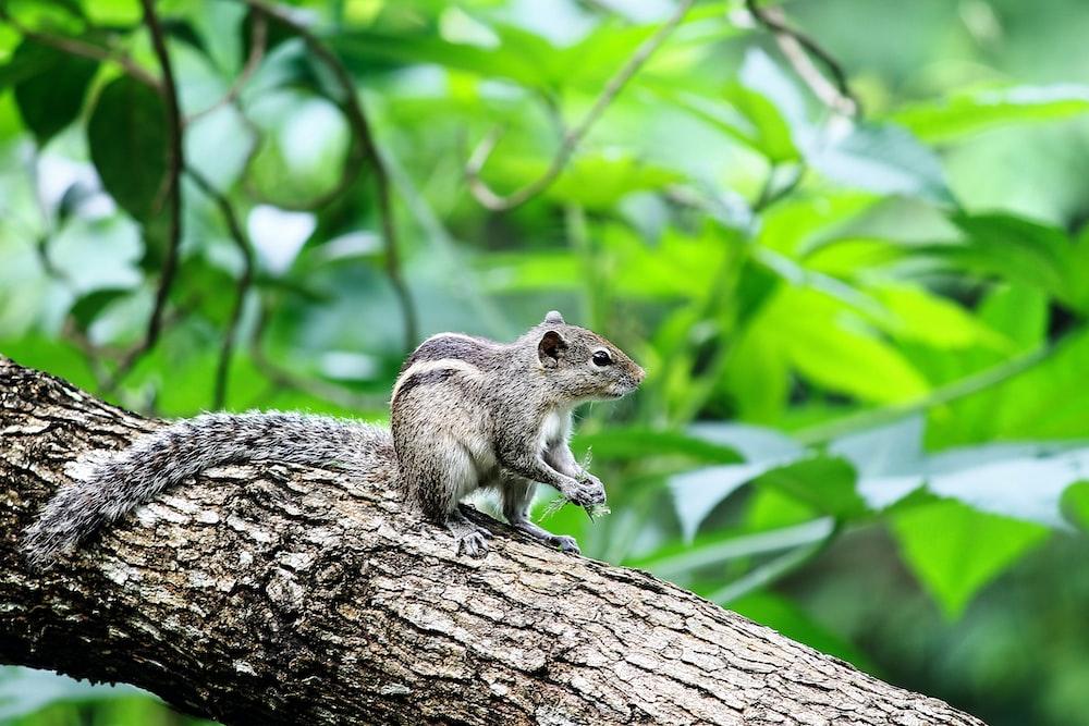 squirrel on tree brunch