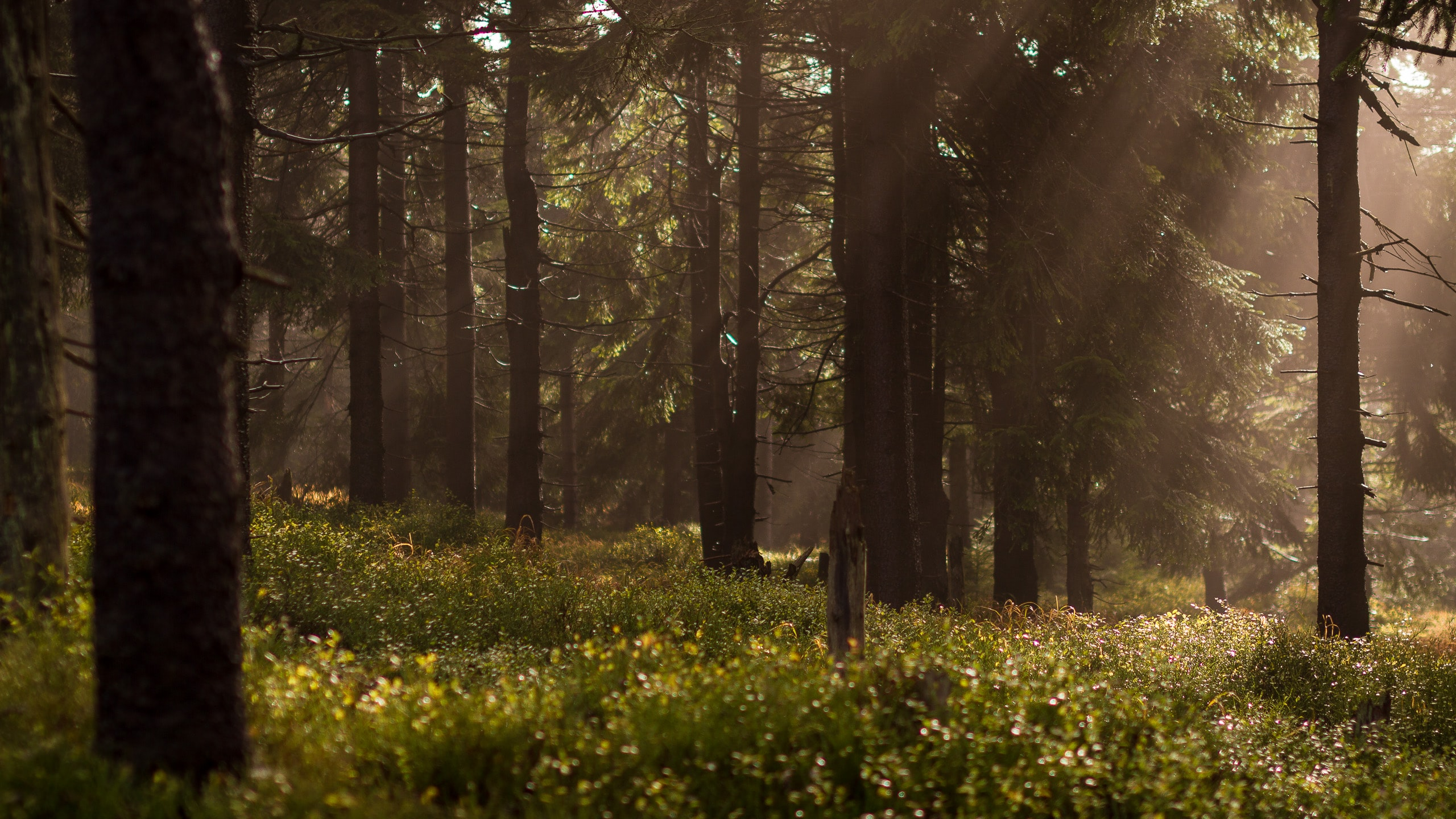Grass and trees in a forest with rays of sunlight peeking through