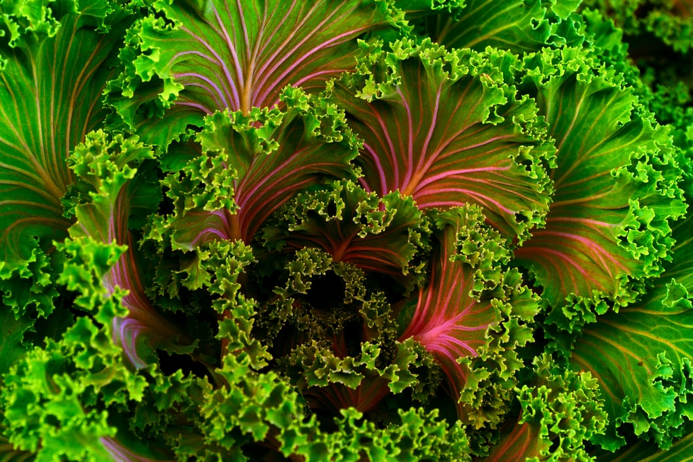 focus photo of green vegetables