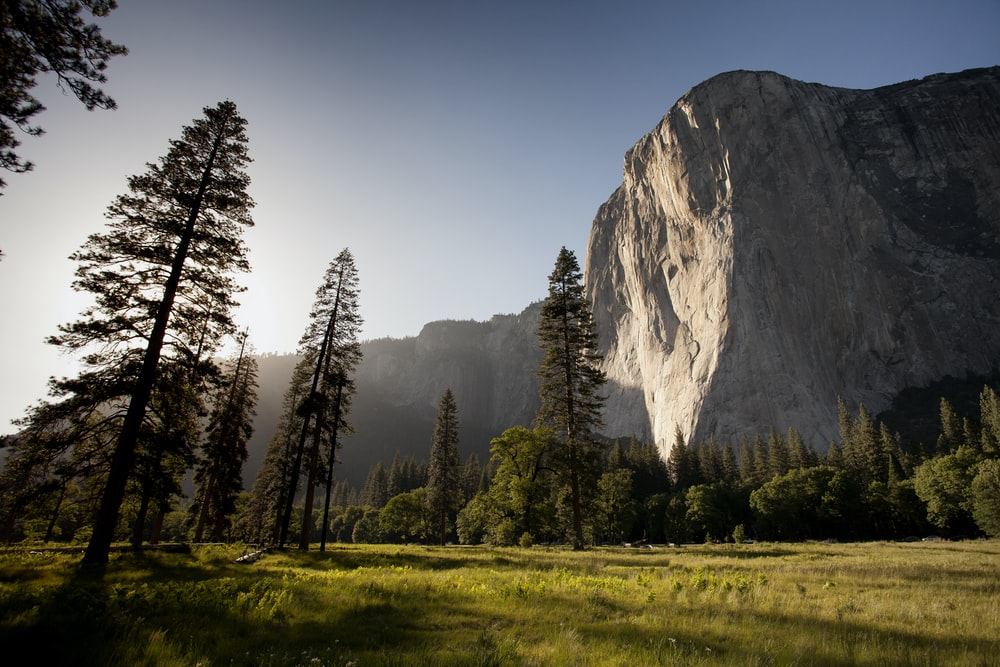 The Sunlit Face Of El Capitan In Yosemite Surrounded By Evergreen Trees