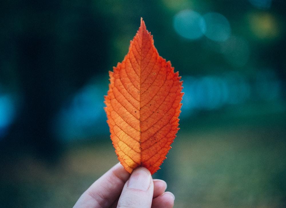 shallow focus photo of orange leaf