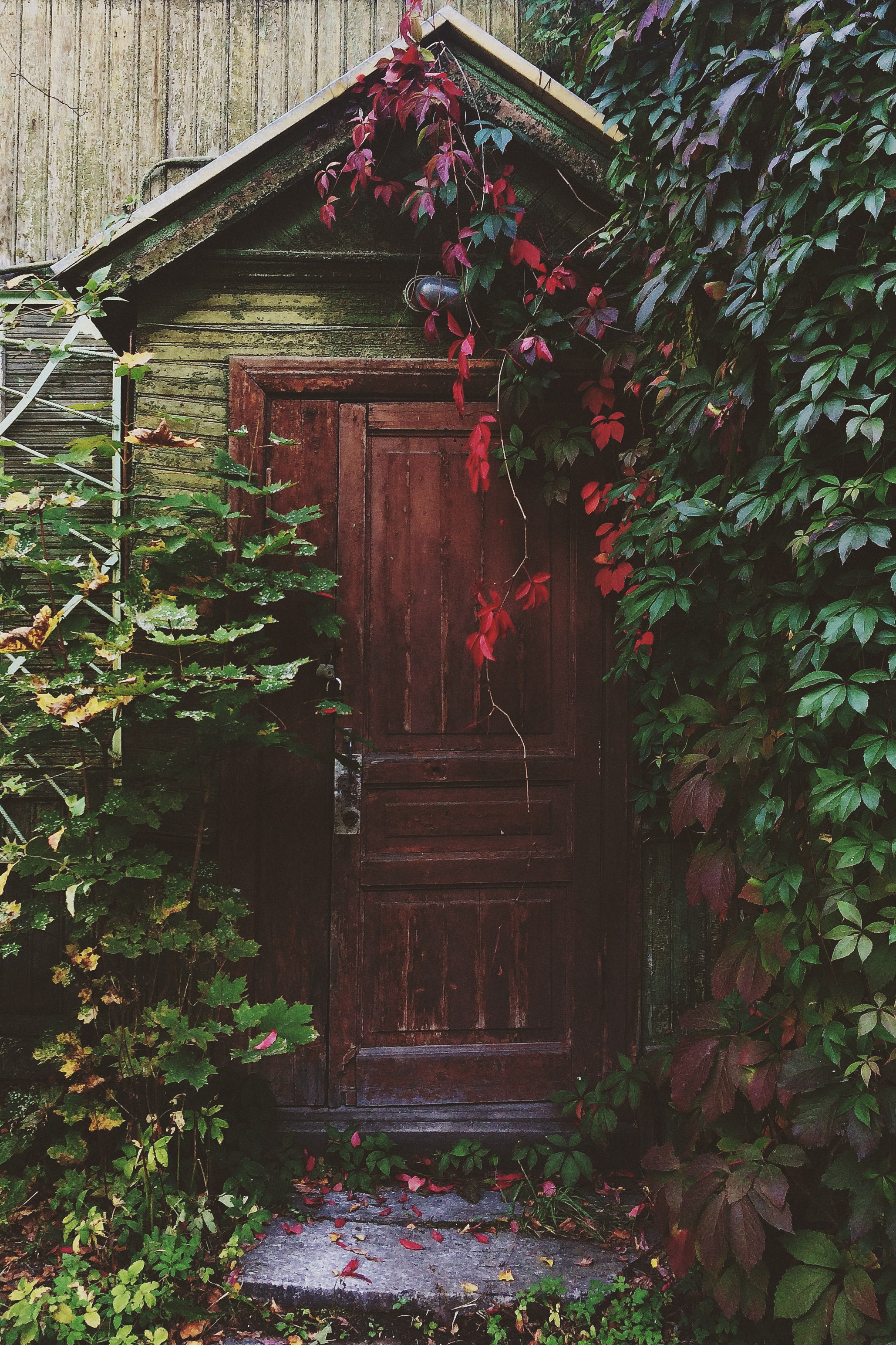 Rustic wooden door surrounded by red and green climbing ivy with stone steps and wooden wall in the background