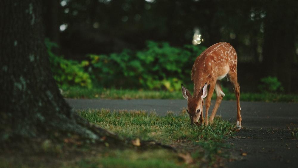 brown deer standing near tree