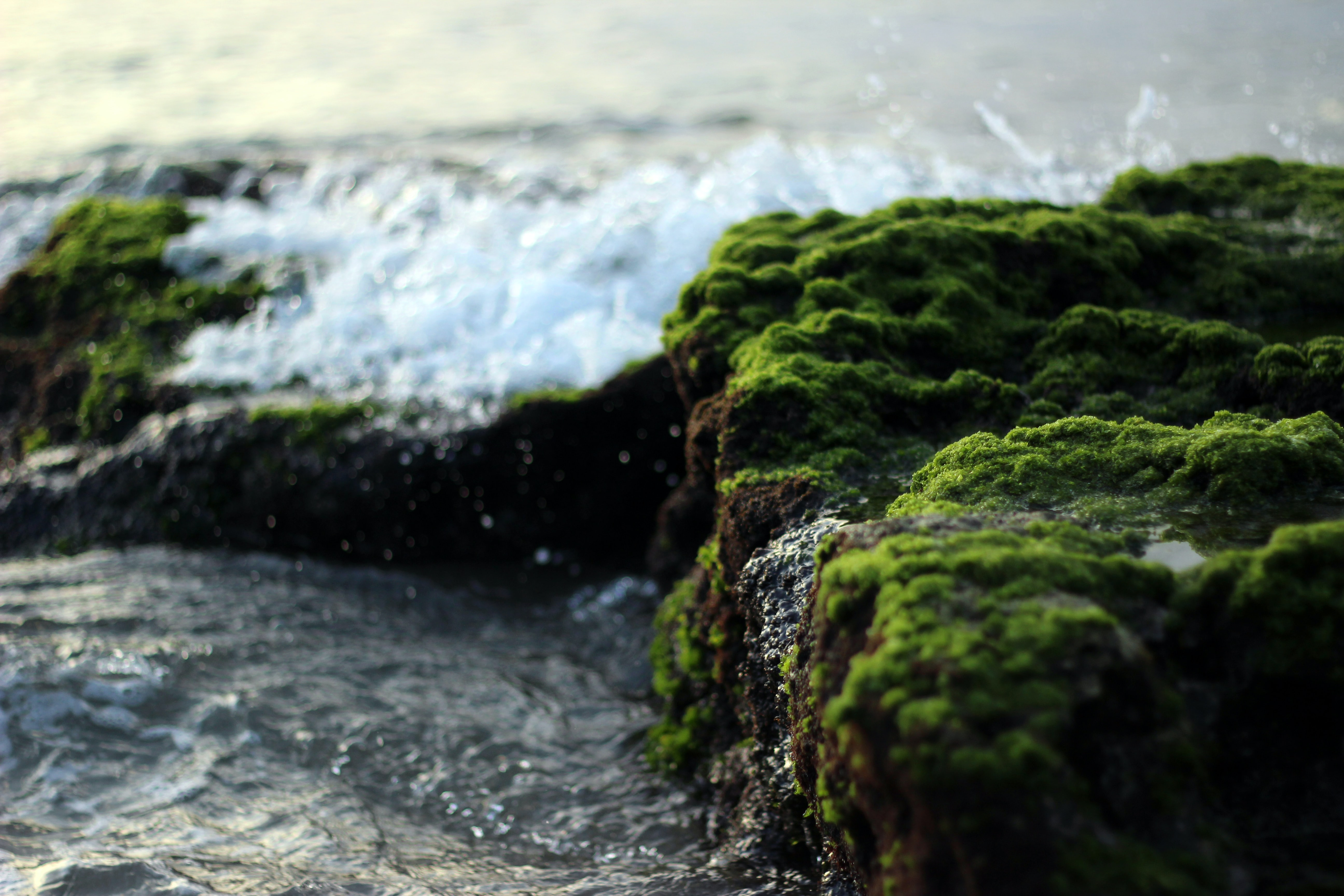 A close-up of sea waves crashing against mossy rocks