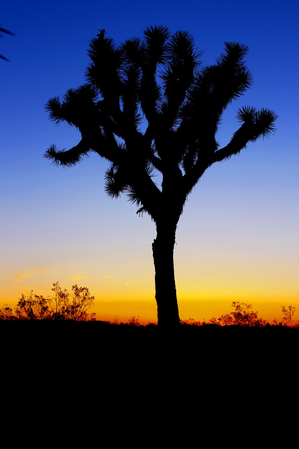 silhouette. of tree in sunset