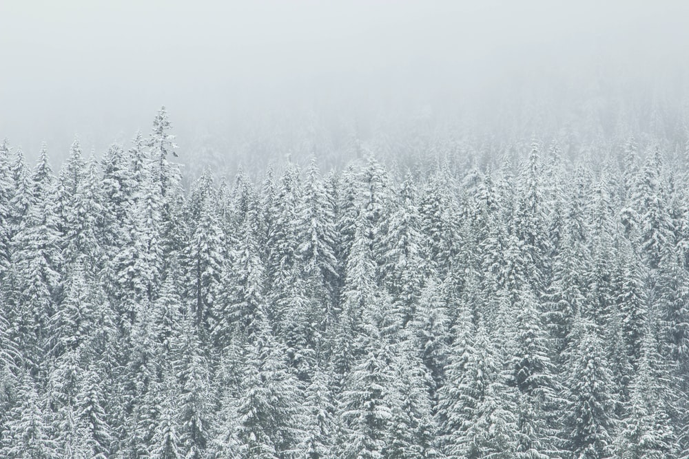 trees covering snow