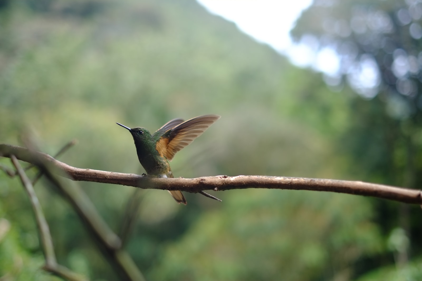 "Fujifilm X-E1 sample photo. ""Hummingbird perching on branch"" photography"