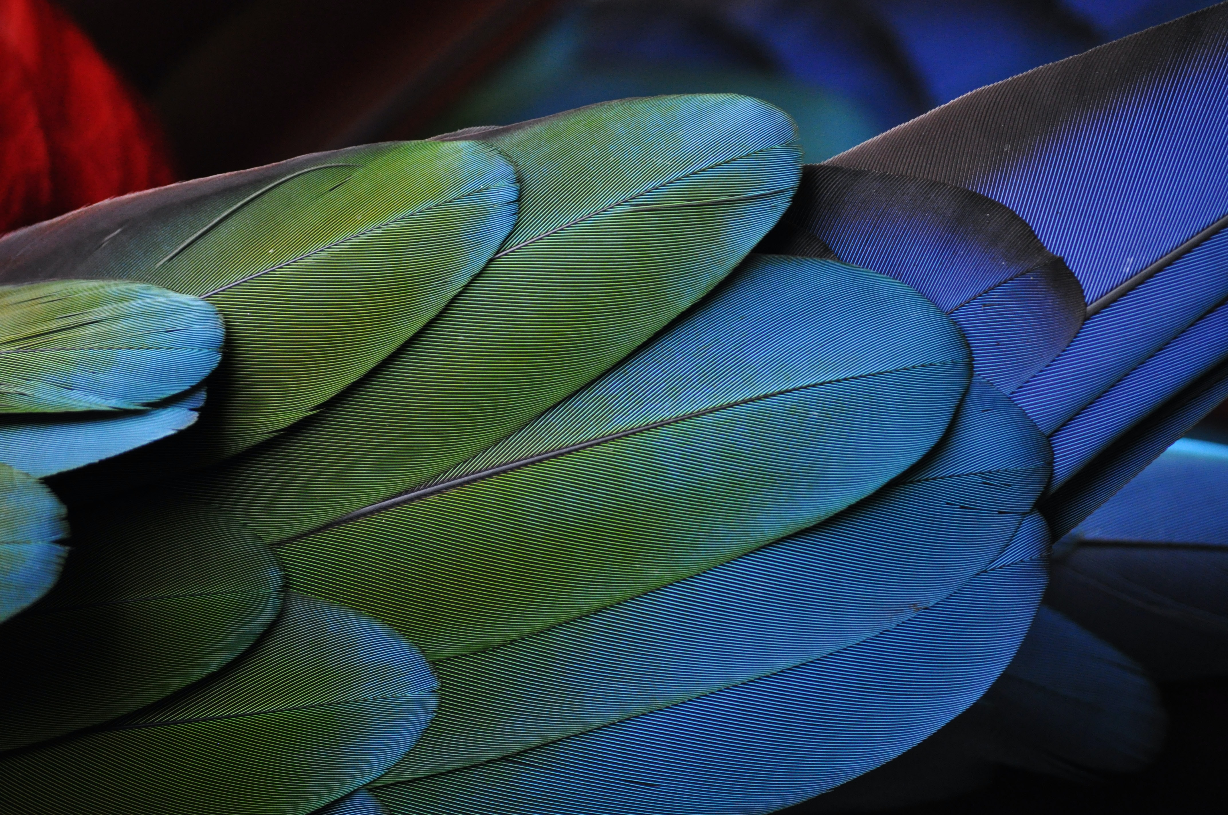 green and blue feathers