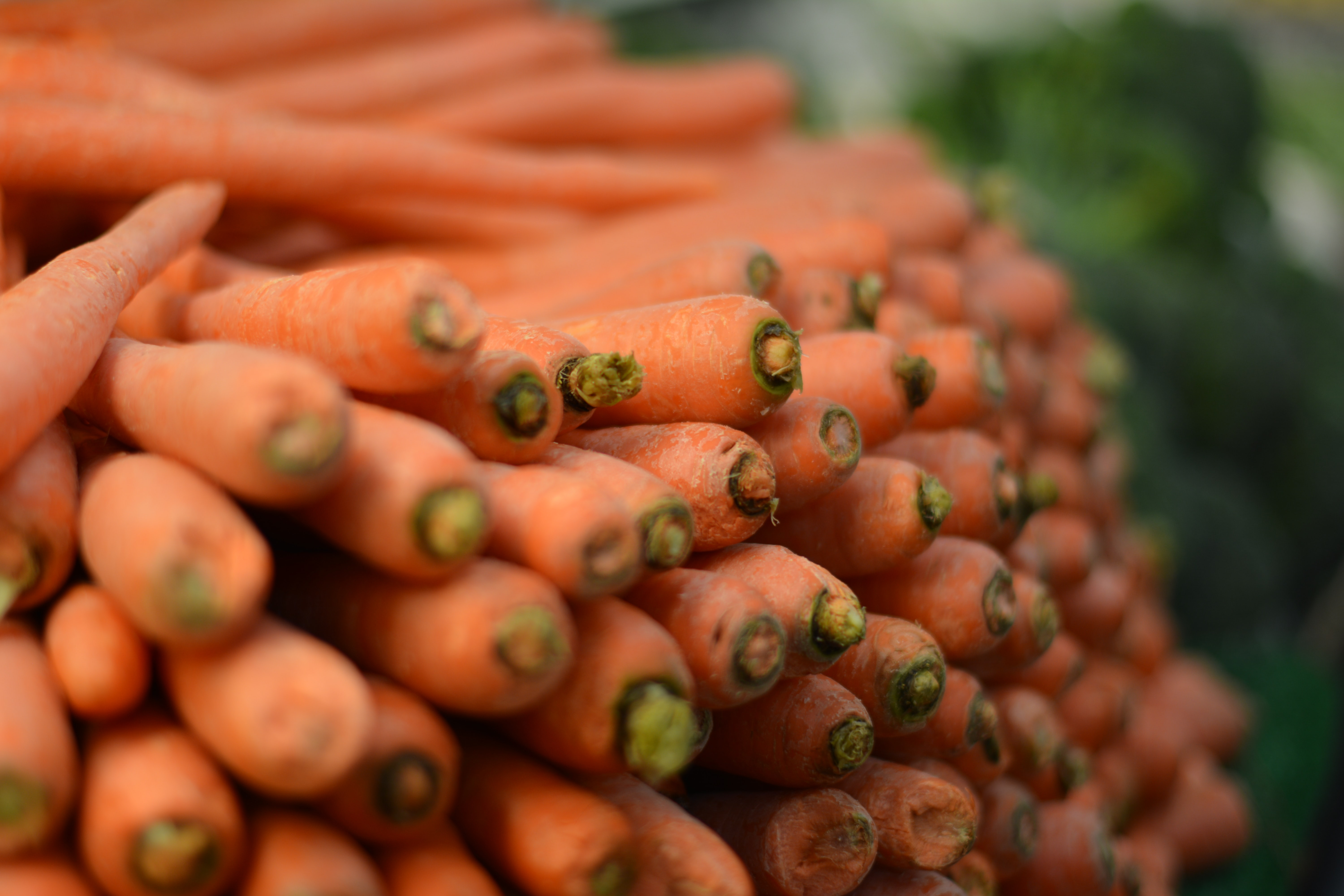 photography pile of carrot